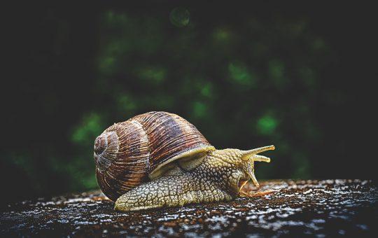 Slakken bestrijden door het gebruik van aaltjes